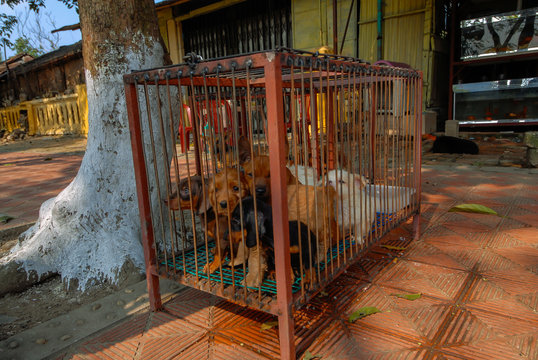 Small dogs locked in a cage.