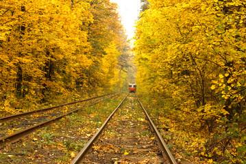 Old red tram running through the forest part in the Kiev, Ukraine