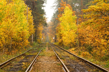 Tram rails in the autumn forest of Kiev, Ukraine