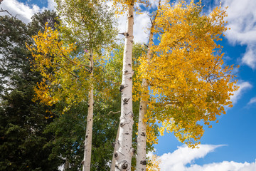 Fototapete - Autumn in Bryce Canyon National Park