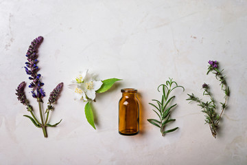 Different types of fresh herbs for alternative medicine and