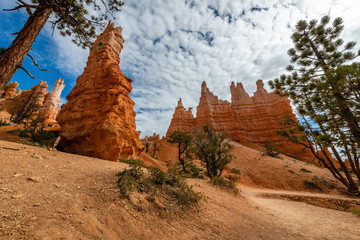 Wall Mural - Queen's Garden Trail of Bryce Canyon