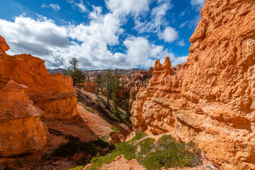 Fototapete - Queen's Garden Trail of Bryce Canyon