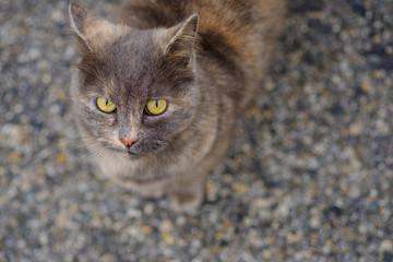 Chat tacheté gris et roux assis dans la rue. Top vue.