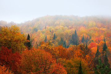 Bright autumn trees caught in fog