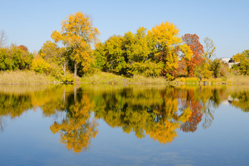 Autumn deciduous forest reflected in the river. Bright blue sky