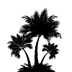 Palm tree silhouettes – for stock vector