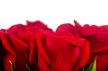 Bouquet of red roses with white background