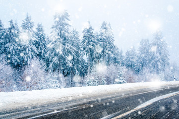 Winter landscape: road and snow covered trees