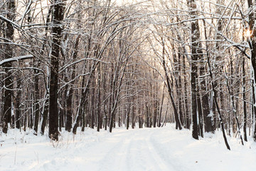 snowy road in the winter forest film photography