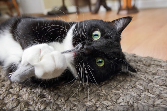 Black and white tuxedo cat playing with a catnip mouse