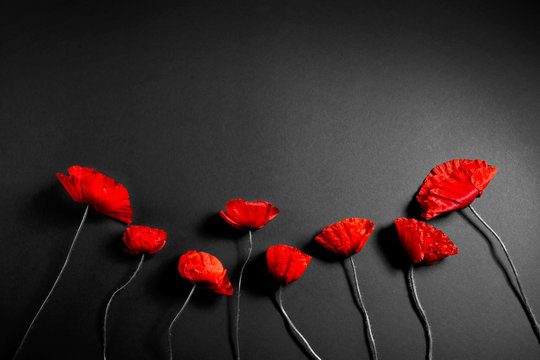 Red poppies on a dark background