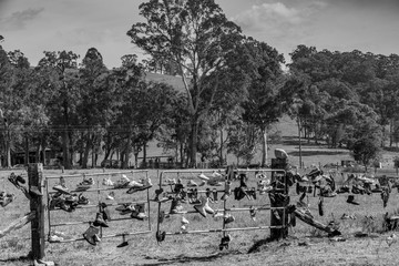 Boot Hill in Black and White