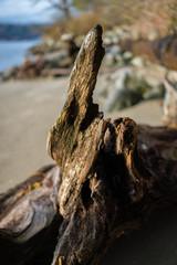 A part of a fallen tree