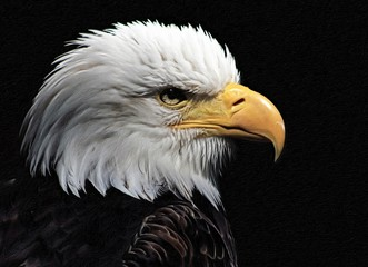 Bald Eagle heraldic animal of the United States of America Wall mural