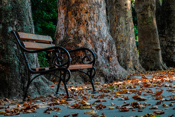 An empty bench against the backdrop of thick tree trunks.