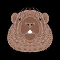Groundhog Day. Concept National holiday in the USA and Canada. Vector illustration of the face of the animal groundhog. Black background.