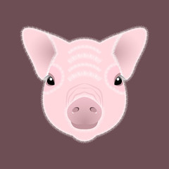 Pig, piglet. Face. Vector illustration. Nice style. Chinese New Year. Symbol of 2019.