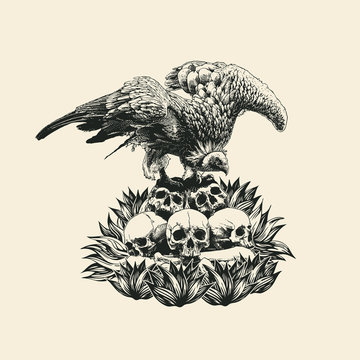 Design T-shirt With Griffon Vulture On The Skulls. Retro Engraving Style. Vector Illustration.