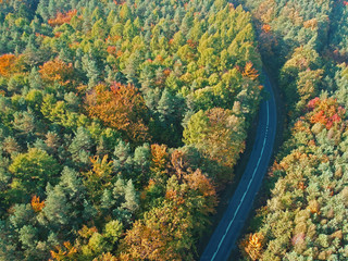 Aerial view on curved asphalt road in mixed forest during autumn