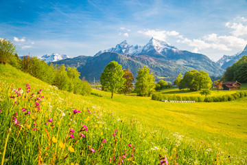Wall Mural - Idyllic mountain scenery in the Alps with blooming meadows in springtime