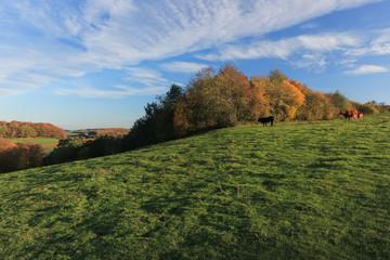 malerischer Blick auf den Tüteberg im Naturpark Westensee im Herbst