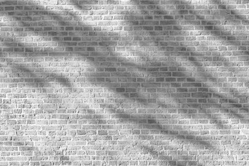 Wall Mural - Tree shadow on white brick wall