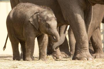 Printed kitchen splashbacks Elephant Aziatische baby olifant - heerlijk zonnetje