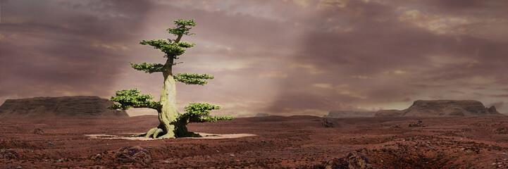 green tree in the desert lit by a sunbeam