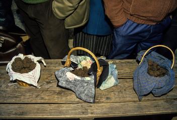 Truffe noire, Tuber melanosporum, marché de Lalbenque, 46, Lot