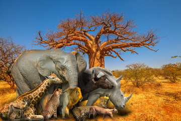 Baobab tree in Musina Nature Reserve, one of the largest collections of baobabs in South Africa with Big Five and wild african animals on savannah landscape. African safari scene. Wallpaper background