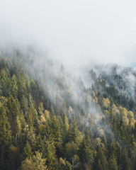 Deurstickers Bergen Misty forest seen from above