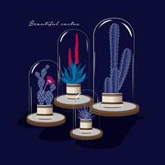 Cactus with flower and aloe vera in glass  isolated on navy blue background