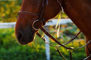Horse head in the setting sun. Horse theme