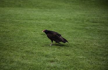 Protected Eagle