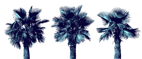 Set of graphic palms