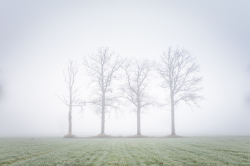Four big trees in a mystic landcsape in the green meadow