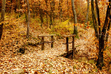 Small bridge made of wood in the forest. Sunset, autumn, lake Sumarice near the Kragujevac