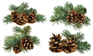 Fototapeta Green fir branch with cone on white background with clipping pass obraz