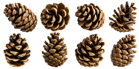 Brown pine cone on white background with clipping pass Wall mural