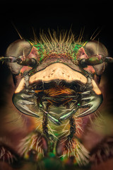 Extreme magnification - Tiger beetle