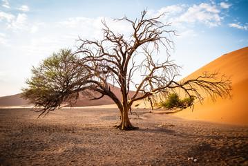 Twin Trees - One Survivor
