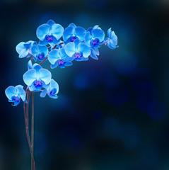 Blue orchid branch on dark bokeh background
