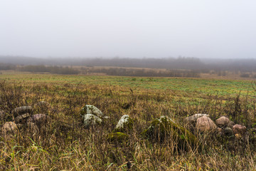 a field with dry grass and stones, the forest is covered with fog, autumn landscape