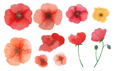 wild flowers poppy watercolor pattern illustration seamless