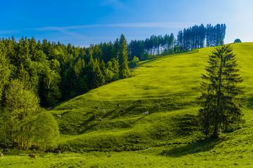 Green fields with blue sky, Schoenengrund, Hinterland, Appenzell
