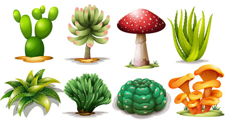 Set of different cactus