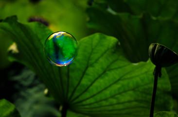 bubble in leaves