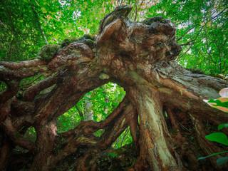 Root of a fallen tree