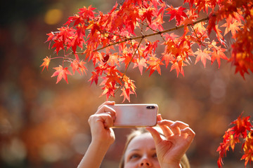 A woman takes photographs of leaves on an autumn day at Gyeongbok Palace in central Seoul